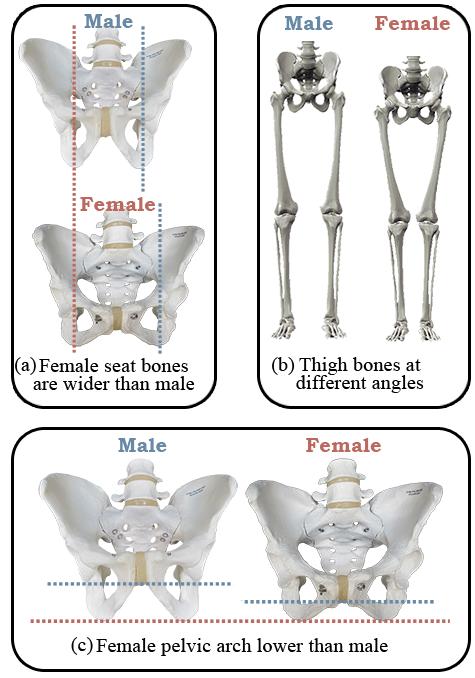 Saddles for Women Male vs Female Comparison